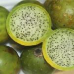 Excelente fruta exótica el sanky beneficiosa para la salud…