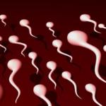 Beneficios del esperma….