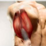 Y hablemos del musculo biceps braquial…